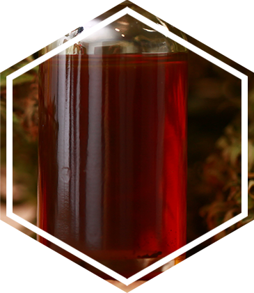 The dark amber colored liquid that is CBD extract at other points of the extraction process